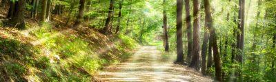 Waldweg: Viele Wege führen zum Ziel